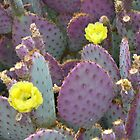 Prickly Pear Cactus - Arizona by Jamie Alexander