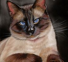 Siamese Cat by art-of-dreams