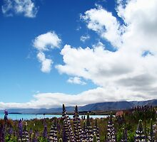 Lakeside Lupins by davidandmandy