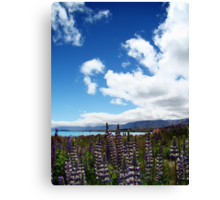 Lakeside Lupins Canvas Print