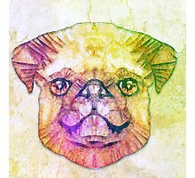 abstract pug puppy  Photographic Print