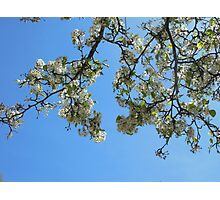Blossoms in the Sky Photographic Print