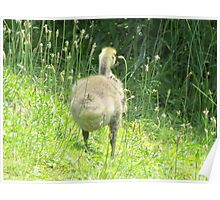 Cute Little Goose  Poster