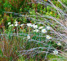 Spring Native Garden by Guyzimijz