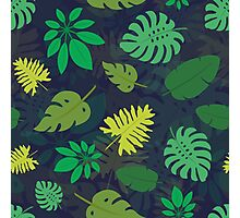 Pattern with tropical leaves Photographic Print