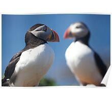 Puffins! Puffins! Puffins! Poster