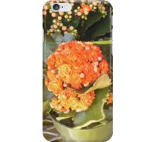 Two Orange Potted Plants iPhone Case/Skin