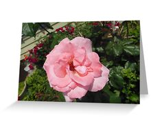 Single Bright Pink Flower Greeting Card