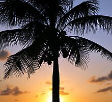 Tropical sunset with red sky, clouds and coconut tree silhouette by Anton Oparin