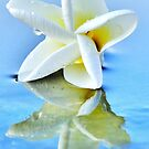 The Perfect Plumeria by Randy Richards