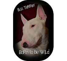 Bull Terrier born to be wild Photographic Print