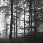 Misty forest by AnnaGo