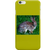 Content Bunny iPhone Case/Skin
