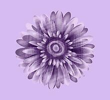Purple Daisy Vintage by Silvia Neto