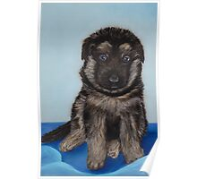 Puppy - German Shepherd Poster