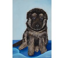 Puppy - German Shepherd Photographic Print