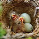 Hungry Baby Finch by DiEtte Henderson