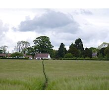 Barley Field Photographic Print