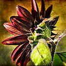 Spicy Sunflower by DiEtte Henderson