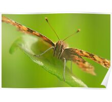 Comma butterfly close up Poster