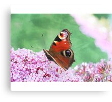 Butterfly Haze Canvas Print