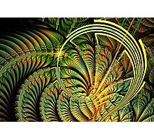 Fern Loop Photographic Print