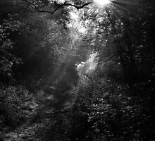 'Hazy Wood' by NaturesEarth