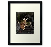 A girl has to get ready for the evening Framed Print
