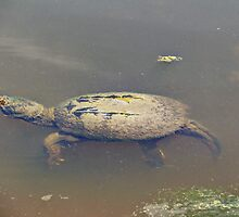 Old Mossy Back Snapping Turtle by MotherNature