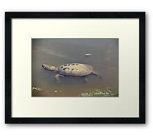 Old Mossy Back Snapping Turtle Framed Print