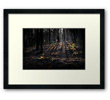 Shadowy forest Framed Print