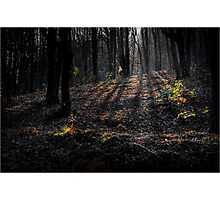 Shadowy forest Photographic Print
