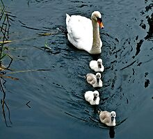 Family by Hayley Musson