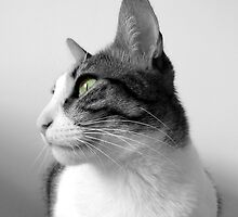 Beautiful Peaceful Cat - Black White by Silvia Neto