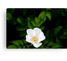 Beach Rose II Canvas Print
