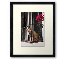 I want to play with you Framed Print