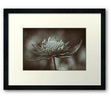 Moody flower Framed Print