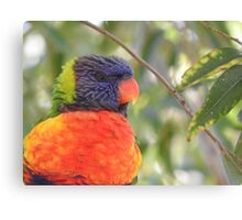 Orange and Blue Watching You Canvas Print