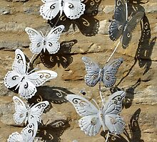 Butterflies and their shadow by Arie Koene