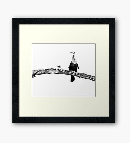 High Key Anhinga Framed Print