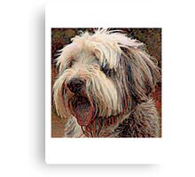Bearded Collie - A Portrait in Oil Canvas Print