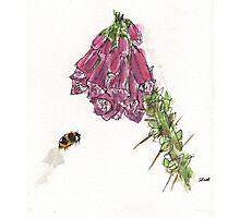 bumbling bee Photographic Print