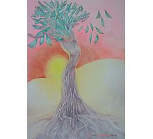 Tree of Woman, African landscape Photographic Print