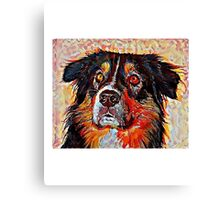 Australian Shepherd - A Portrait in Oil Canvas Print