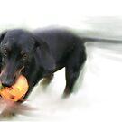 The chaser's war on plastic balls by Tom Godfrey