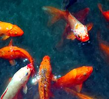 Koi Pond by CanopyGallery