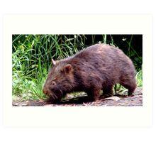 Wombat - PA Art Print