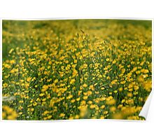 Sea Of Yellow Poster