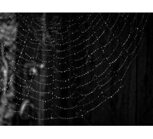 Clever Mr Spider Photographic Print
