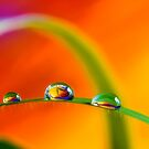 Morning Dewdrops by Veikko  Suikkanen